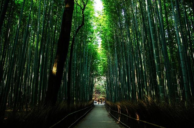 kyoto-1229563_640